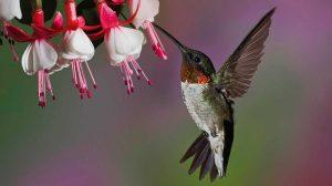 jardines-colibries