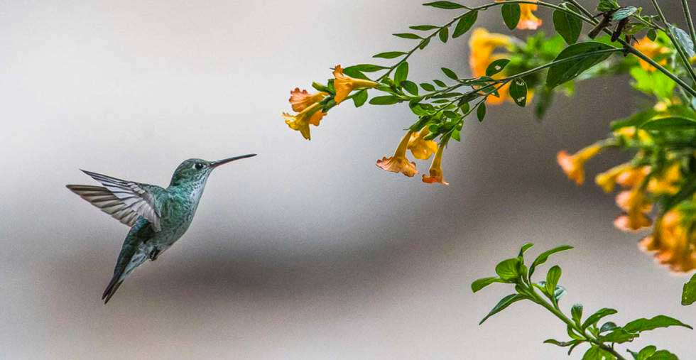 jardines-colibries01