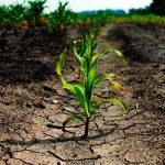 """Científico mexicano busca """"sacarle jugo"""" a la sequía"""