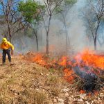 Trabajan para atender y evitar incendios forestales en Guerrero