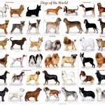 Lanzan campaña para elegir al perro de compañía adecuado según estilo de vida