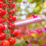 Crean mega iluminación led para horticultura