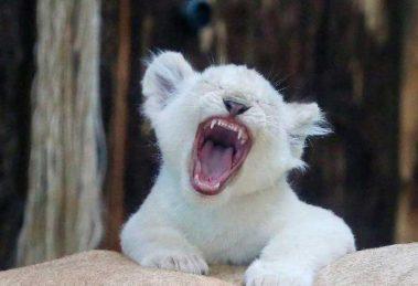 leona-blanca01