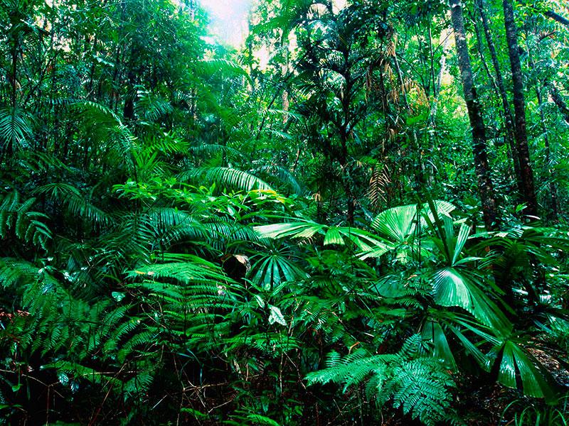 ley-biodivers