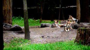 lobeznos-zoo01