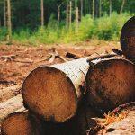 De la madera que se consume en México, 70 % es ilegal