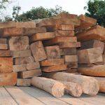 Logran aseguramiento de maderas preciosas en Mérida