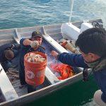 Marina instala operativo contra pesca ilegal Sonora y BC