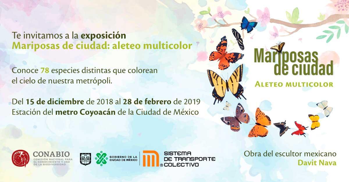 mariposa-coyoacan