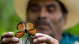 mariposa-coyoacan01