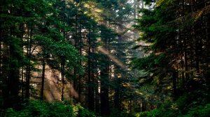 mas-bosques01