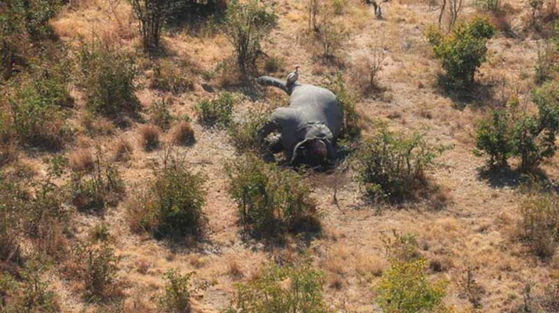 masacre-elefantes