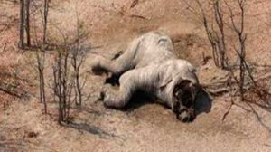 masacre-elefantes01