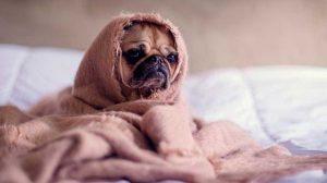 mascotas-frio01