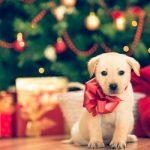 ¿Qué tan bueno es regalar una mascota en Navidad?