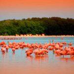 Nuevas rutas ecoturísticas en Mérida