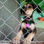 Metro de la CDMX crea Centro de Transferencia Canina