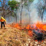 México cuenta con 22 mil combatientes de fuegos forestales
