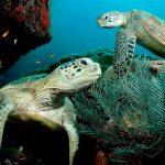 México cumple con la tarea a favor de conservación marina