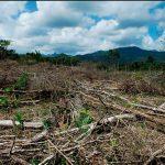 México sufre deforestación de 155 mil hectáreas al año