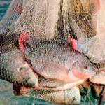 Michoacán impulsa pesca y acuacultura sostenibles