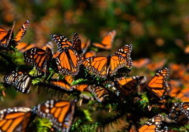 monarca-edomex01