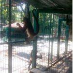 Profepa rescata a mono araña abandonado en caja