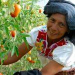 Mujeres rurales clave en combate de hambre y pobreza