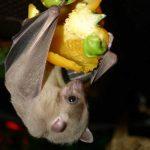 Murciélagos en México al borde de la extinción