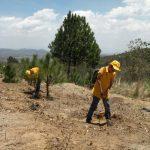 Brigada infantil protege los bosques tlaxcaltecas