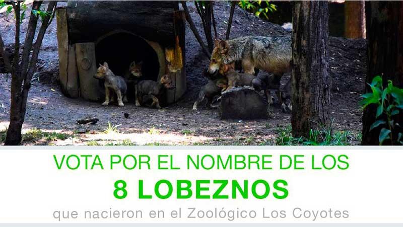 nombres-lobos01