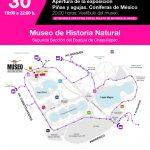 Comienza exposición: Piñas y Agujas. Coníferas de México en MHN