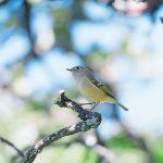Registran nuevas especies en Guanajuato