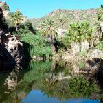 ¿Qué son los Oasis Sudcalifornianos?