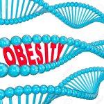 Obesidad causa daño en el ADN