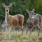 Lanzan operativo contra tráfico de fauna silvestre en Morelos
