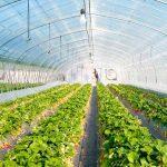 Universitarios optimizan producción de hortalizas en invernadero