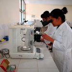 """Domestican"" organismos para optimizar producción de mezcal"