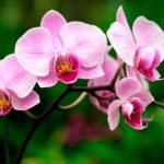 Orquídea, amenazada entre comercio ilegal y urbanización