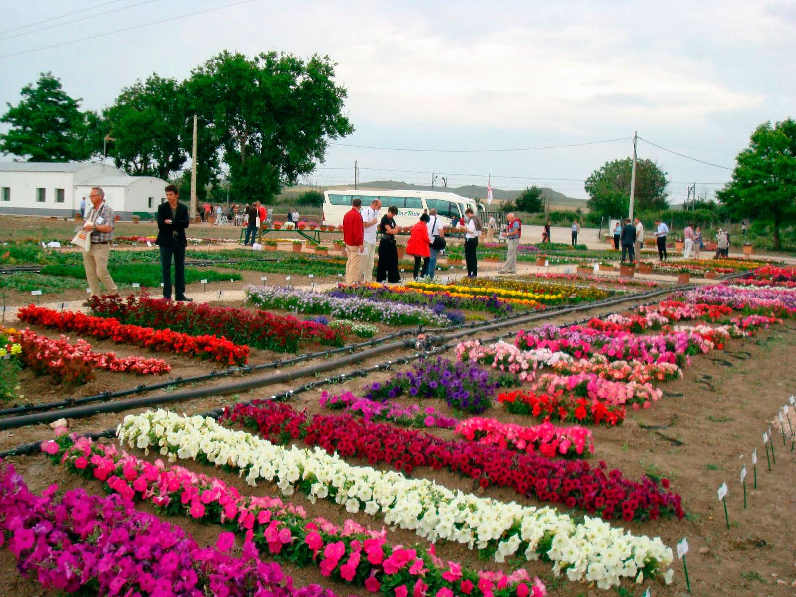 m xico pa s de flores y una horticultura ornamental