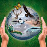 Más de 190 países buscan proteger la biodiversidad del mundo
