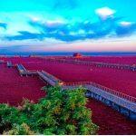 ¿Conoces el paraíso rojo de aves exóticas?