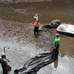 ¿Por qué aparecieron peces muertos en el lago de Chapultepec?