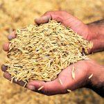 Peligra capacidad alimentaria en el mundo: FAO