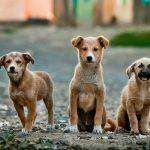 Argentina vive horror con envenenamiento masivo de perros