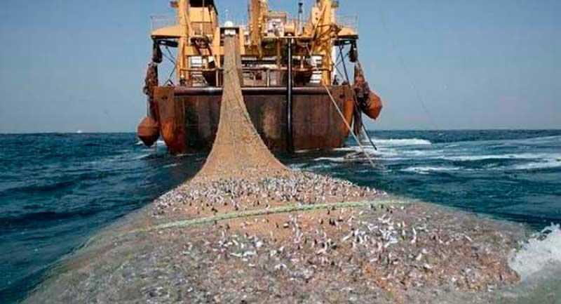 pesca-ilegal01