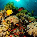 Piden proteger arrecifes ante obras en puerto de Veracruz
