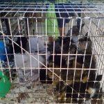 Organización pide detener maltrato animal en Mercado Sonora