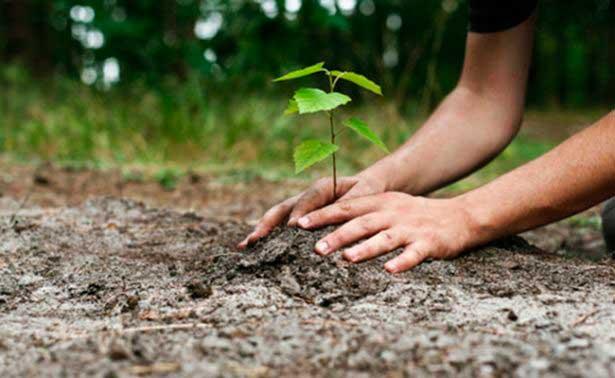 plantar-arboles