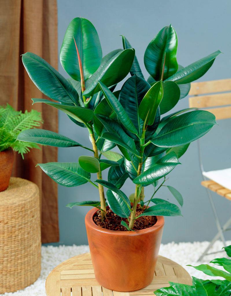 Plantas para purificar el aire de interiores - Plantas interiores ...